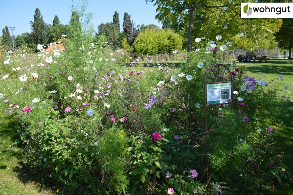 Hirschstettner Blumengärten
