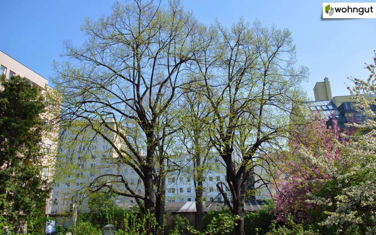 TRIANGEL21_Innenhof Nachbargebäude 1